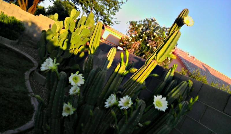 flowers 9-26.jpg